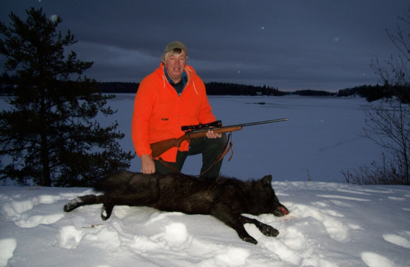 Wolf hunting at Paradise Cove Resorts.