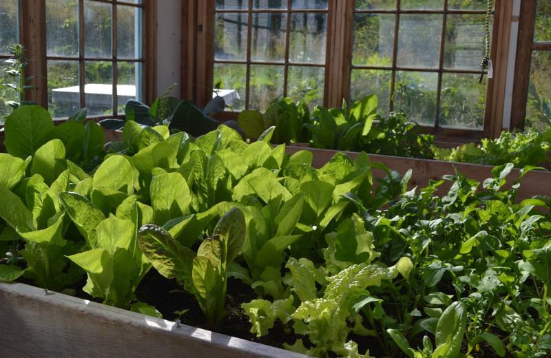 Garden at Zachar Bay Lodge.