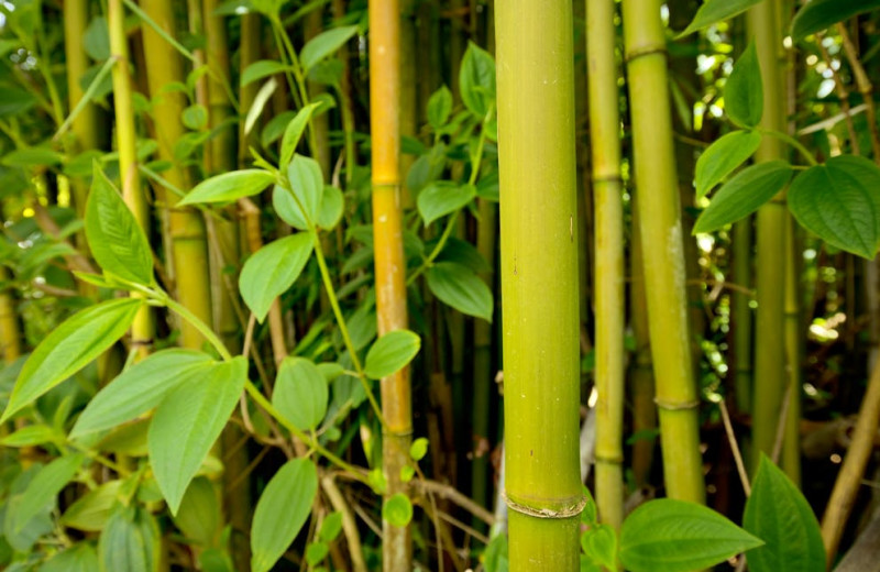 Bamboo at Hale 'Ohu Bed & Breakfast.