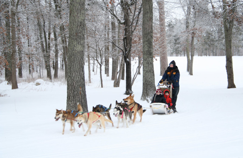 Dog sled at Grand View Lodge.