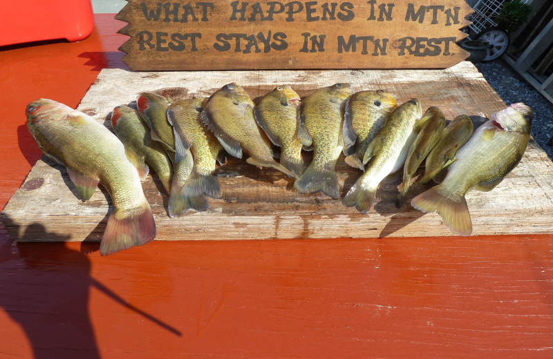 Fishing at Mountain Rest Cabins and Campground.