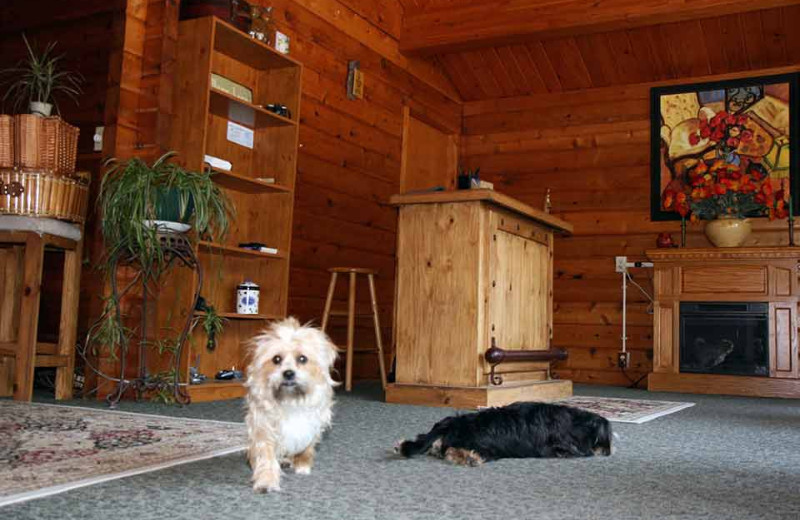 Pets welcome at Eldora Lodge.