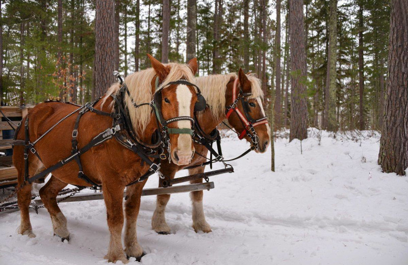 Sleigh ride at Johnny Seesaw's.