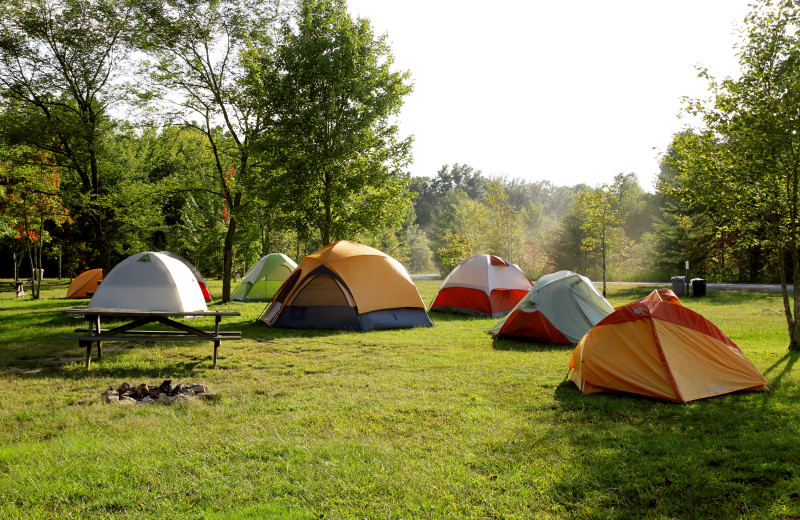 Tents at ACE Adventure Resort.
