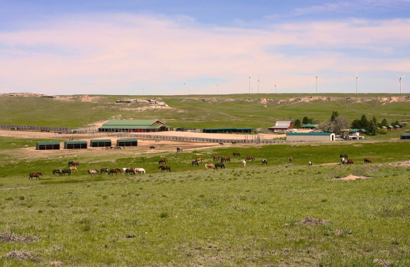 Exterior view of Colorado Cattle Company Ranch.
