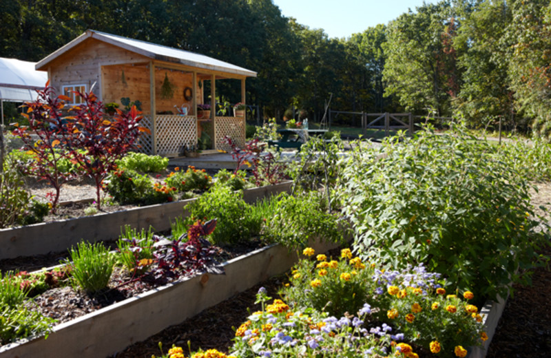Farm to table garden at The Lodge at Woodloch.