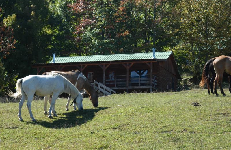 Cabin Exterior at Horseshoe Canyon Ranch