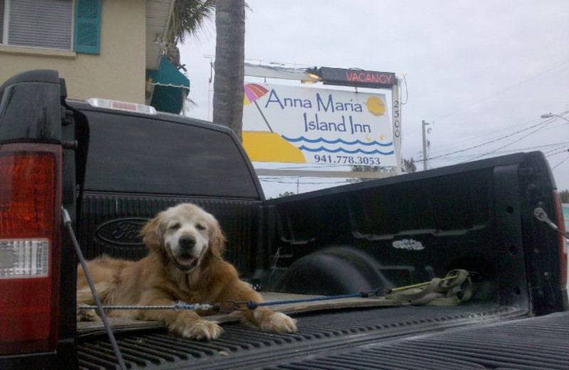 Pet friendly accommodations at Anna Maria Island Inn.