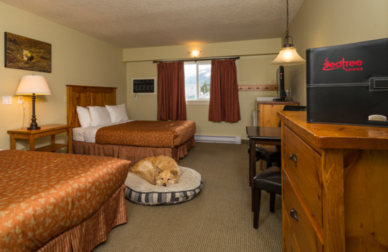 Pet friendly room at Red Tree Lodge.