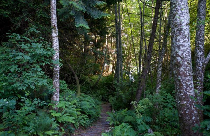 Forest at Ocean Wilderness Inn & Spa Retreat.