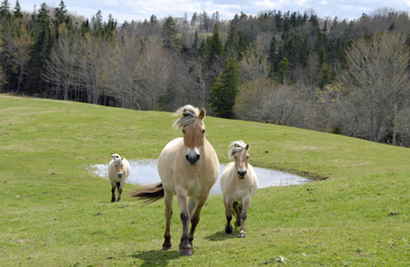 Horses at Crown Jewel Resort Ranch.