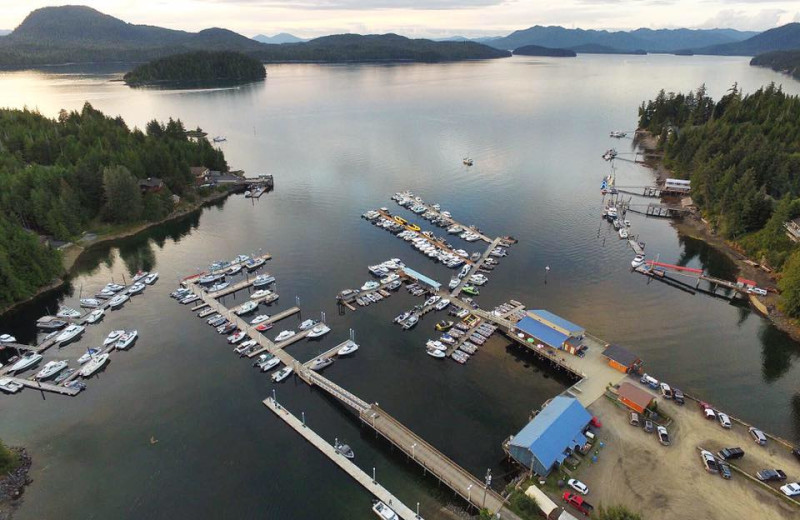 Aerial view of Knudson Cove Marina.
