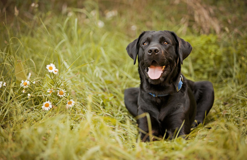 Pets welcome at Amazing Branson Rentals.