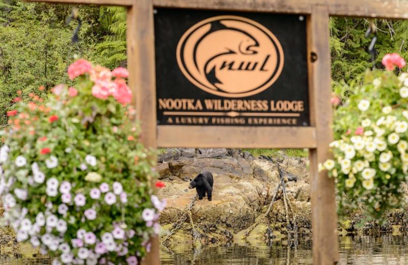 Bear at Nootka Wilderness Lodge.