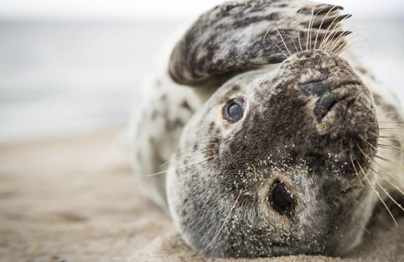 Seal at The Nantucket Hotel and Resort.