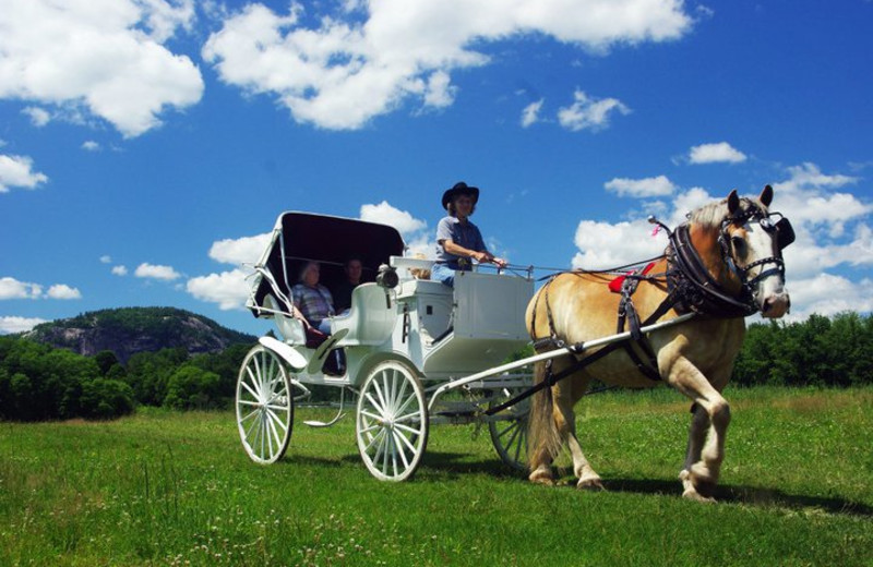 Private Victorian horse-drawn carriage ride at Farm by the River Bed & Breakfast with Stables-What a great way to propose or