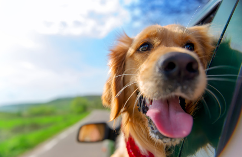 Pets welcome at Vista Vacation Rentals.