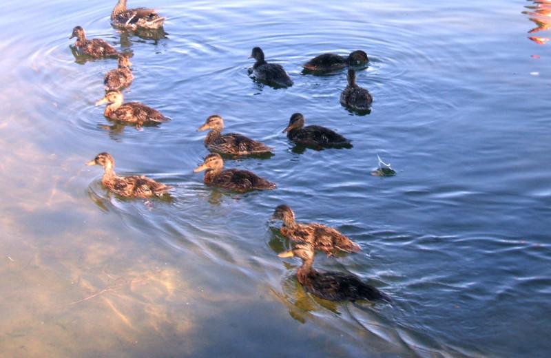 Sunset Bay Resort (Frazee, MN) - Resort Reviews - ResortsandLodges com