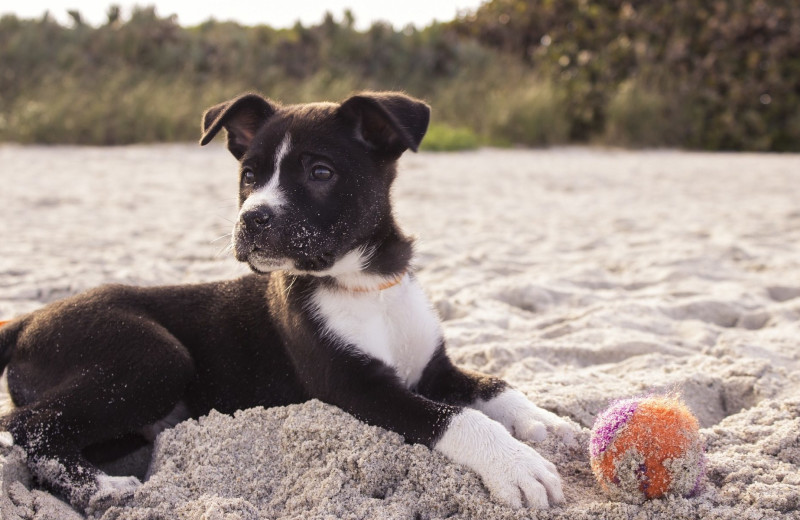 Pets welcome at Sandbridge Blue Vacation Rentals.