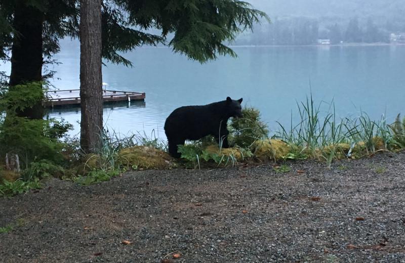 Bear at Screamin' Reels Lodge.
