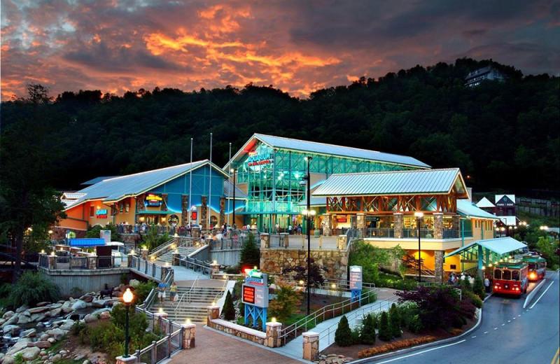 Aquarium at Mountain Shadows Resort.