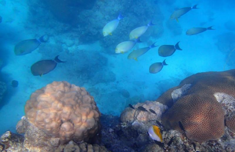 Snorkeling at Navini Island Resort.