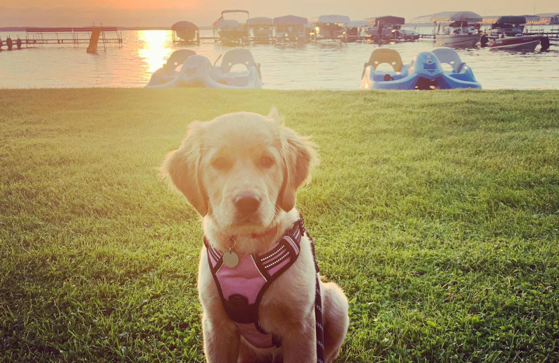 Pets welcome at Bladow Beach Resort