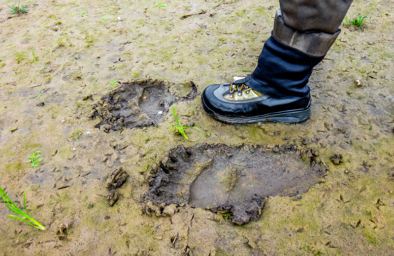 Bear foot print at Angry Eagle Lodge & Outfitters.