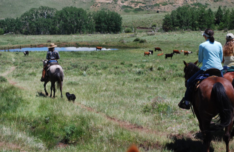 Working ranch horseback rides