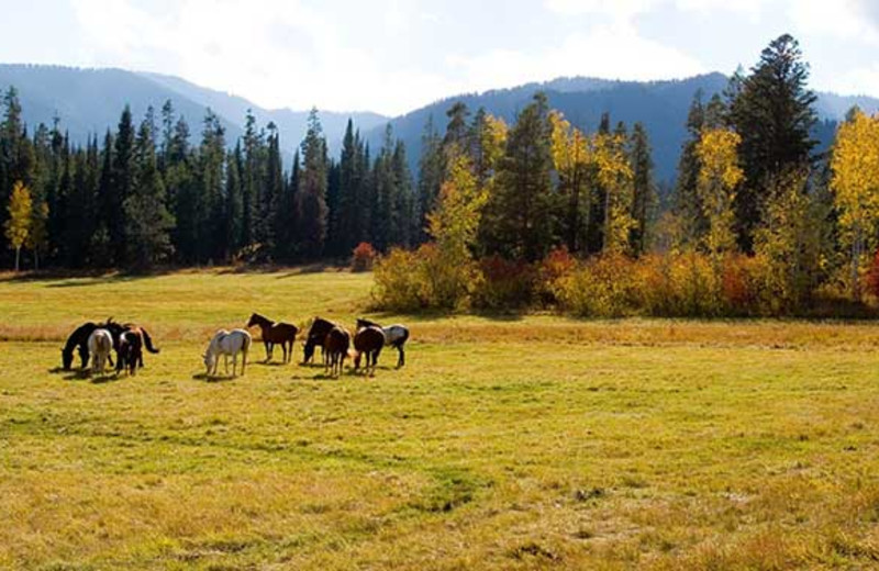 Horses in the field at Trail Creek Ranch.