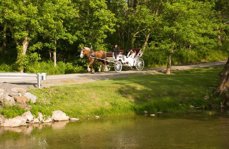 Carriage ride at Creekside Resort.