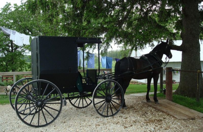 Amish tours can be booked at Stone Mill Hotel & Suites