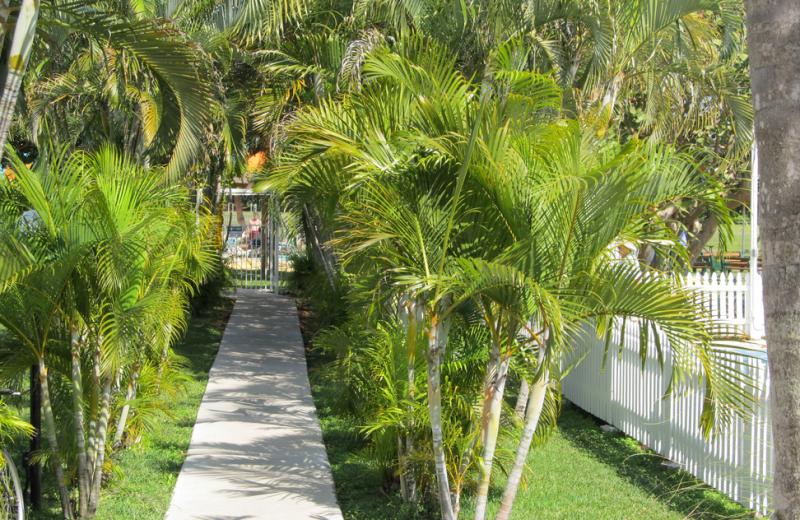 Walkway at Miami Everglades.