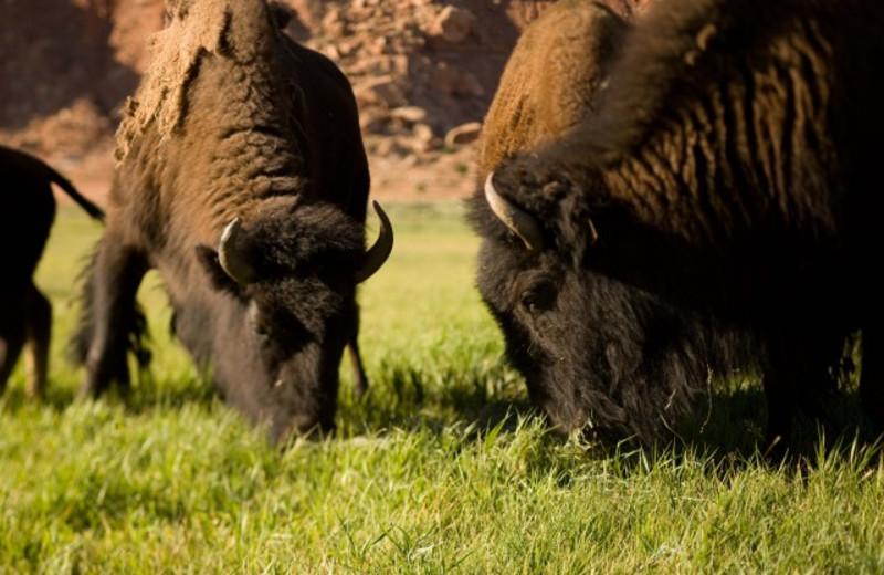Wild life at The Lodge at Red River Ranch.