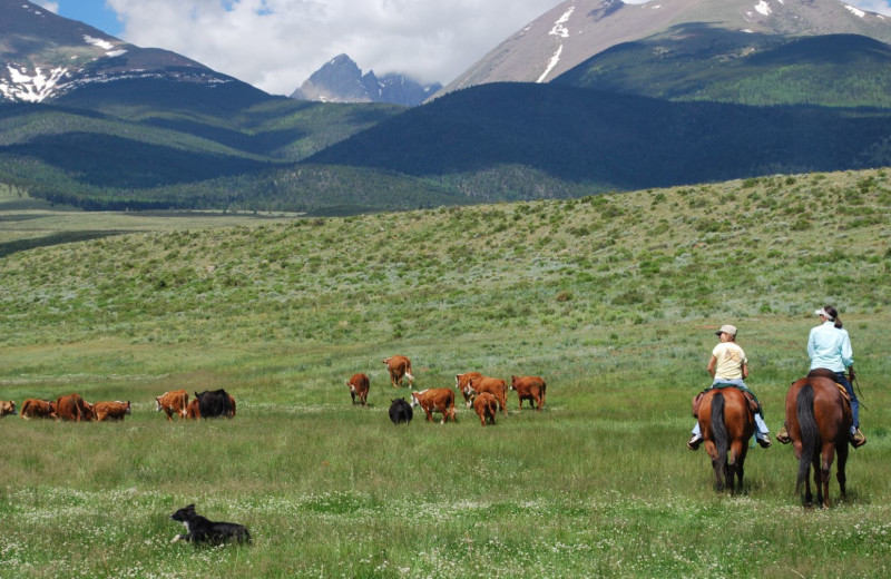 Family horseback rides in the Colorado Mountains
