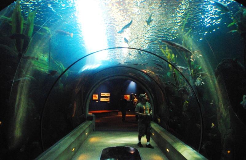 Aquarium at The Heathman Lodge.