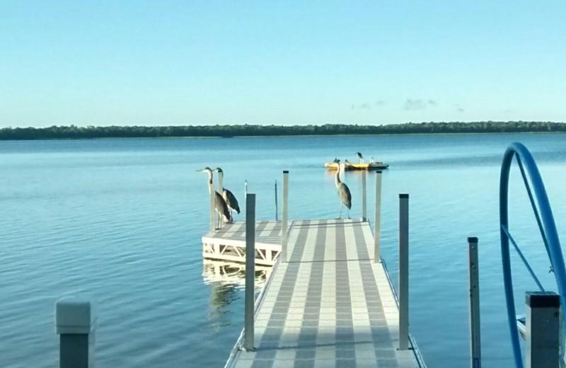 Dock at Woodlawn Resort.
