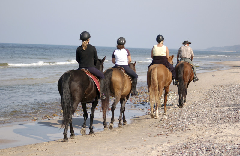 Beach horseback riding at The Grey Gull.