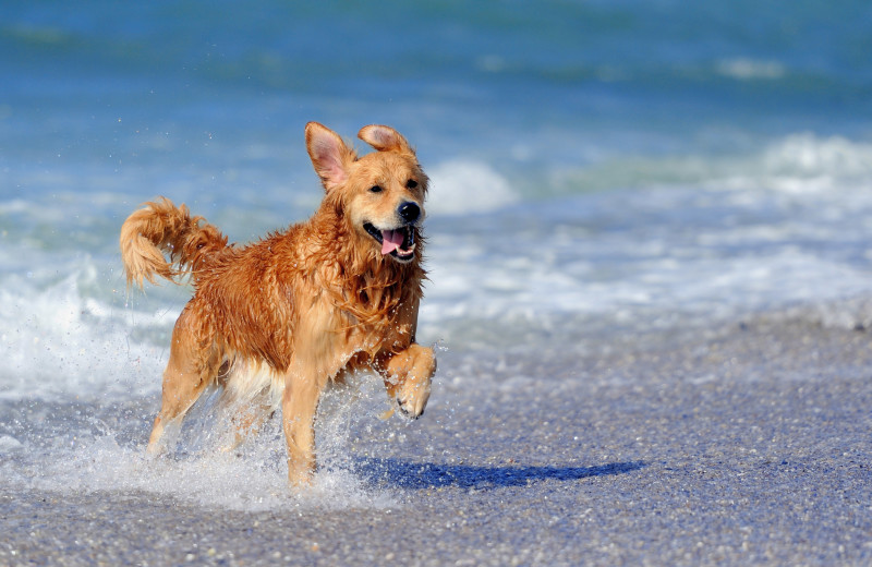 Pets welcome at Sunnyside Beach