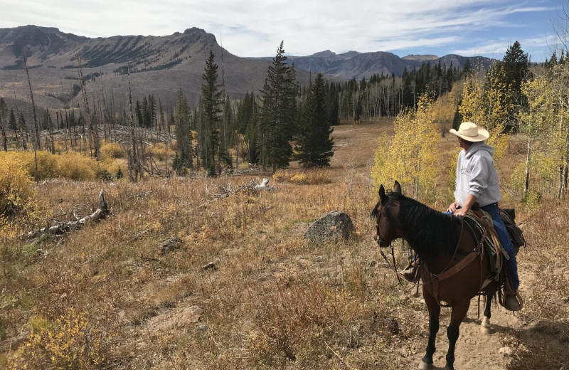 Horseback riding at Trappers Lake Lodge & Resort.