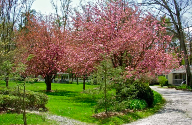 The Grounds at The Cottages of Flat Rock