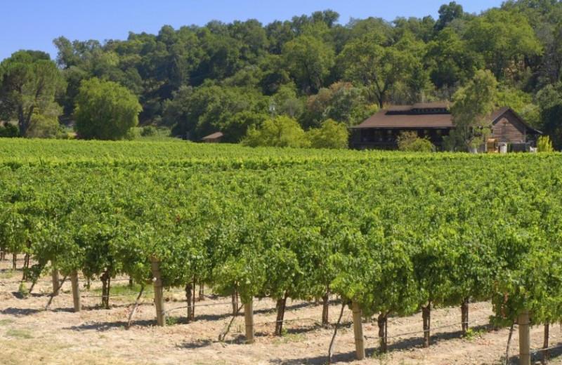 Wineries near Roman Spa Hot Springs Resort.