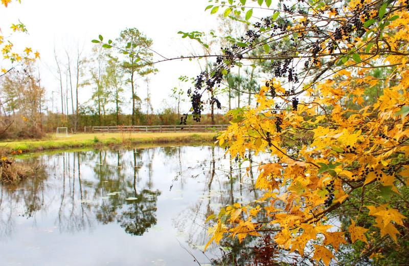 Lake at Berry Creek Cabins.