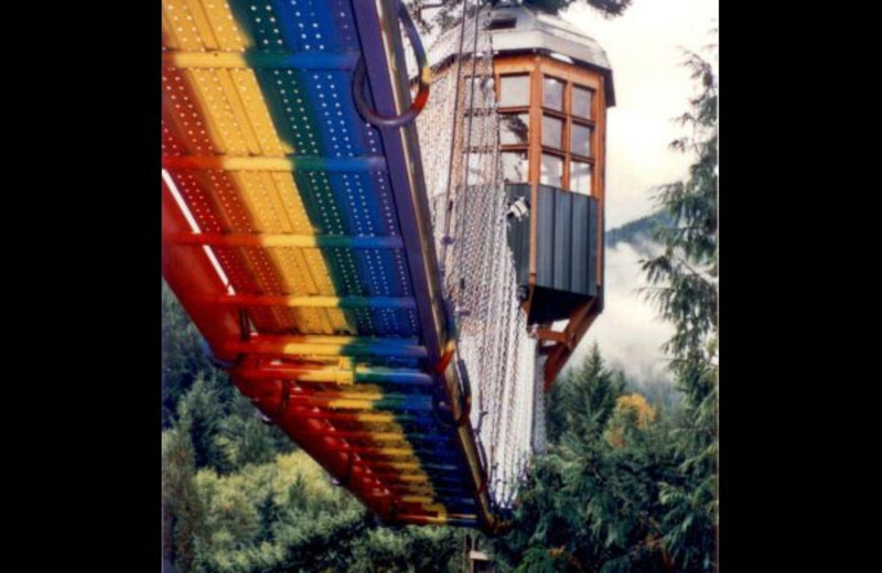 Rainbow bridge at Cedar Creek Treehouse.
