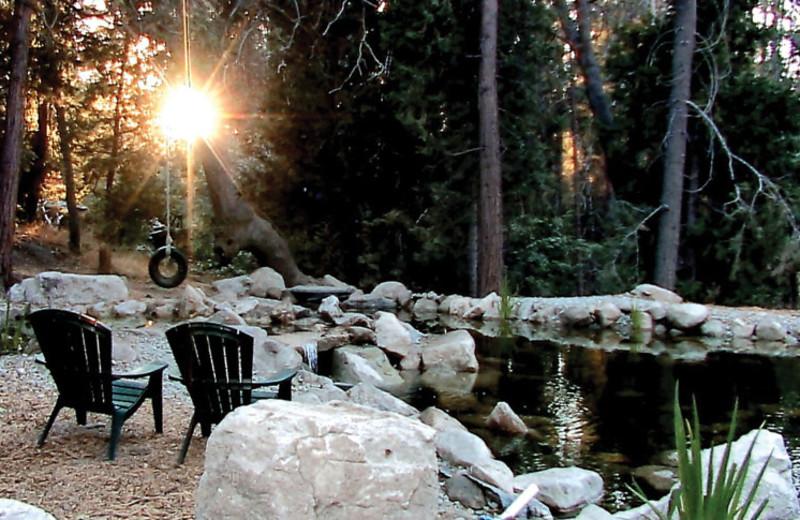Relaxing view at Arrowhead Pine Rose Cabins.