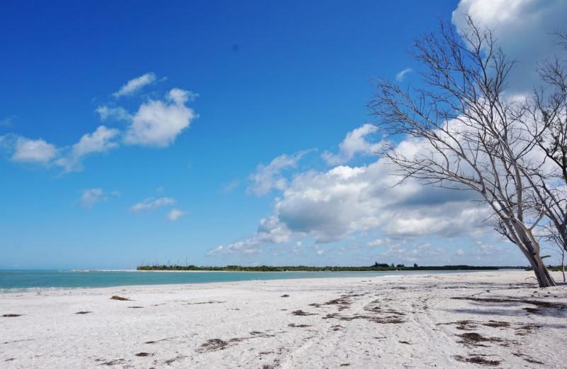 Beach at Palm Island Resort.