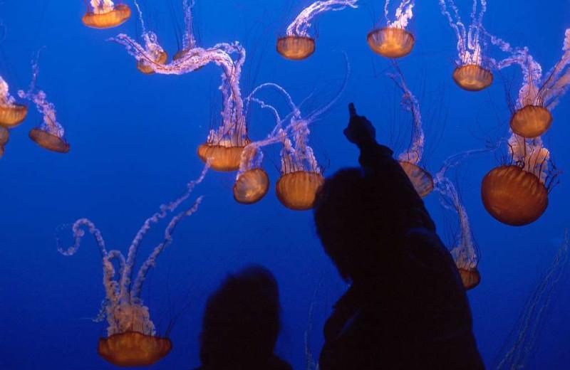 Aquarium near Old Monterey Inn.