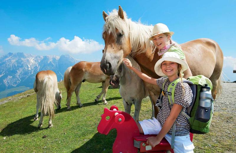 Horses at Hotel Krallerhof.