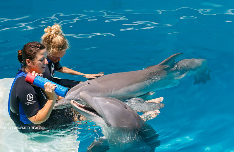 Swimming with dolphins at Bamboo Beach Club.