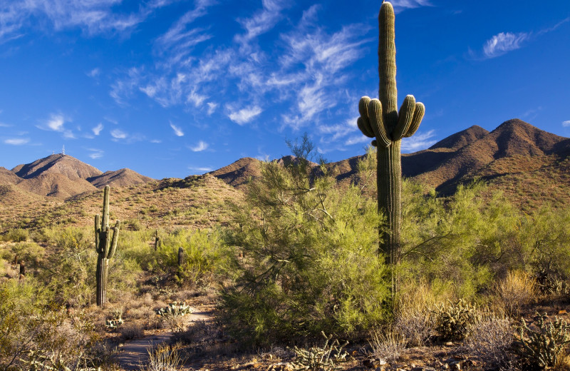 Discover the beautiful landscape of the Sonoran Desert.